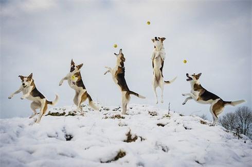 Nhiếp ảnh gia chuyên chụp... chó bay - ảnh 7