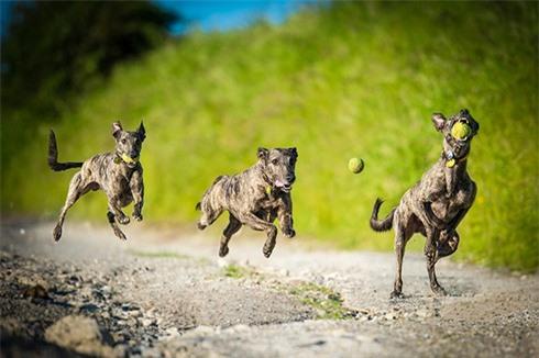 Nhiếp ảnh gia chuyên chụp... chó bay - ảnh 9
