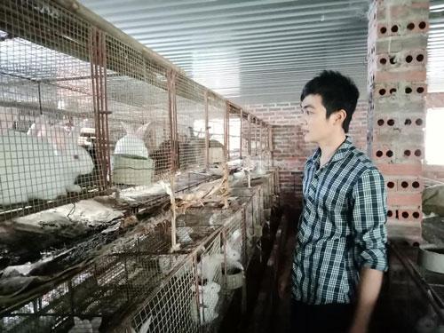 Quảng Ninh: Làm giàu nhờ nuôi thỏ