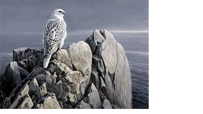 1001 thắc mắc: Loài chim nào được mệnh danh là 'thánh tán gái'? - ảnh 3