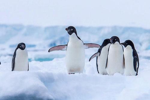 Top 10 loài chim không biết bay đáng yêu nhất thế giới