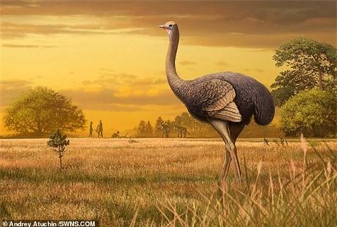 Lần đầu phát hiện loài chim khổng lồ ở châu Âu và cả Bắc bán cầu