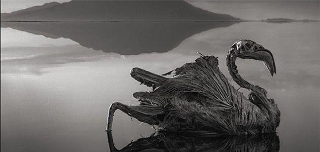 Bí ẩn về hồ nước tử thần khiến động vật hóa đá khi rơi xuống - Ảnh 11.