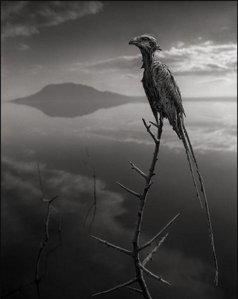 Bí ẩn về hồ nước tử thần khiến động vật hóa đá khi rơi xuống - Ảnh 12.