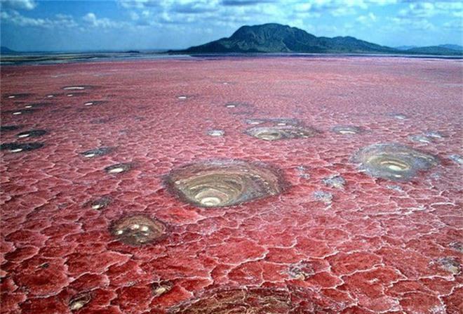Bí ẩn về hồ nước tử thần khiến động vật hóa đá khi rơi xuống - Ảnh 5.