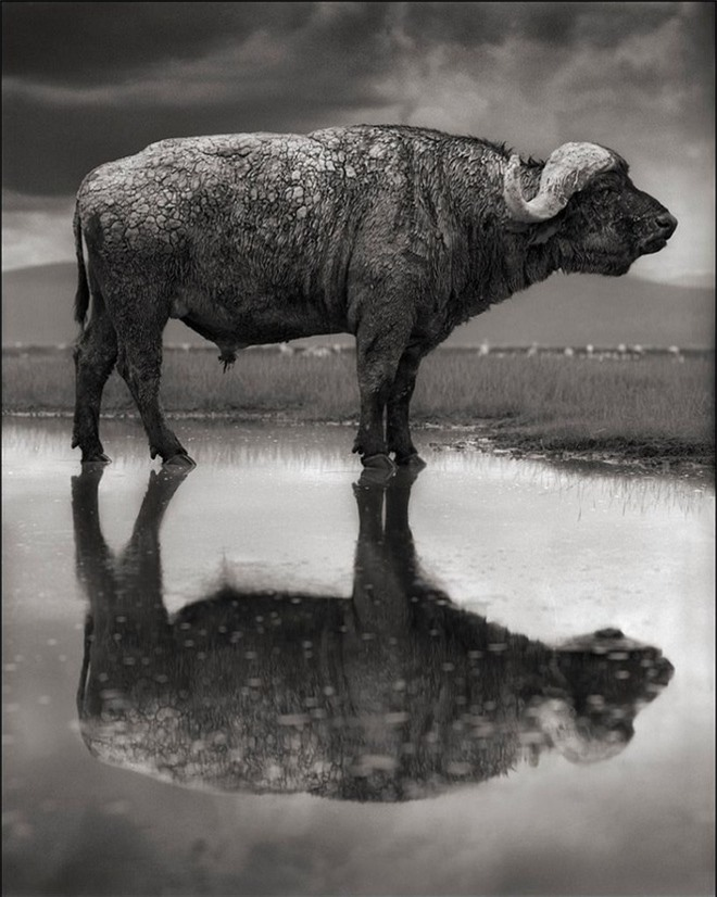 Bí ẩn về hồ nước tử thần khiến động vật hóa đá khi rơi xuống - Ảnh 7.