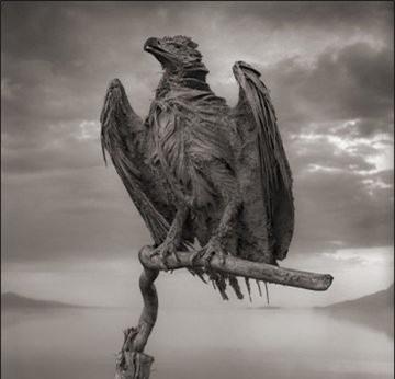 Bí ẩn về hồ nước tử thần khiến động vật hóa đá khi rơi xuống - Ảnh 8.