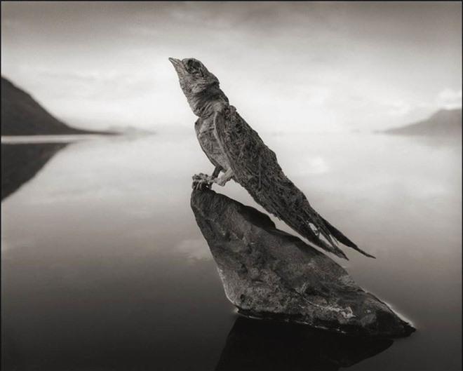 Bí ẩn về hồ nước tử thần khiến động vật hóa đá khi rơi xuống - Ảnh 9.