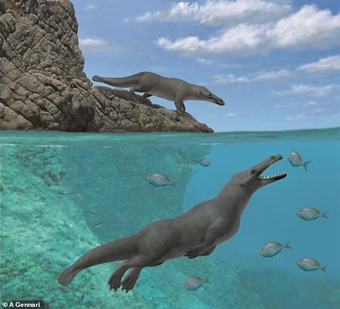 Chân dung tổ tiên của cá voi, cá heo hiện đại