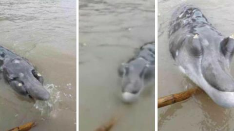 Con cá lạ có mũi dài, răng mọc trên đầu được ngư dân Trung Quốc bắt được