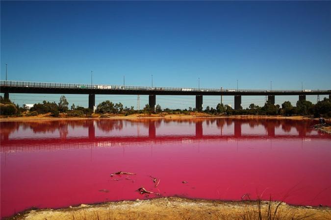 Nếu chỉ thoáng nhìn thì có lẽ người ta sẽ nghĩ hồ nước này được nhuộm phẩm màu hoặc bị ô nhiễm. Ảnh: Hồ nước màu hồng rực trong công viên Westgate ở Melbourne.