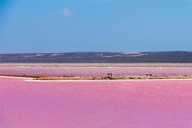 Cảng Gregory ở Tây Australia nằm gần cửa sông Hutt, nơi có hồ Hutt Lagoon. Tùy vào từng thời điểm trong năm, nước ở đây có thể chuyển màu hồng hoặc chuyển màu tím.