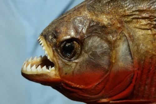 Hãi hùng trước Top 10 loài  'thủy quái' đáng sợ nhất thế giới