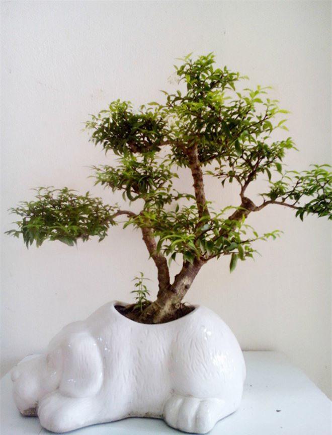 9 loại cây cảnh để bàn vừa đẹp vừa mang lại tài lộc nhất định nên bày - 5