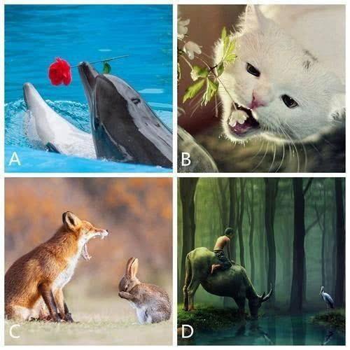 Bạn chọn bức ảnh động vật nào?