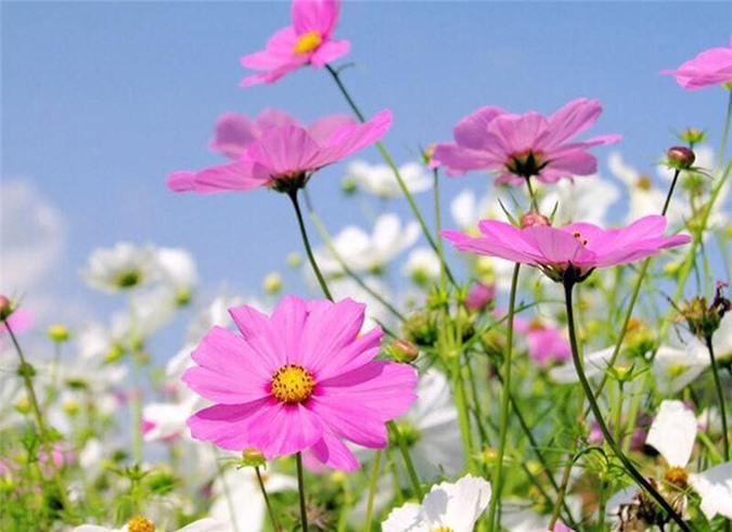Vườn cây ăn quả, hoa lá ngập tràn rộng 5000m2 của diễn viên Kiều Trinh - Ảnh 1.