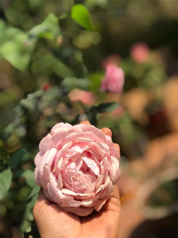 Vườn cây ăn quả, hoa lá ngập tràn rộng 5000m2 của diễn viên Kiều Trinh - Ảnh 9.