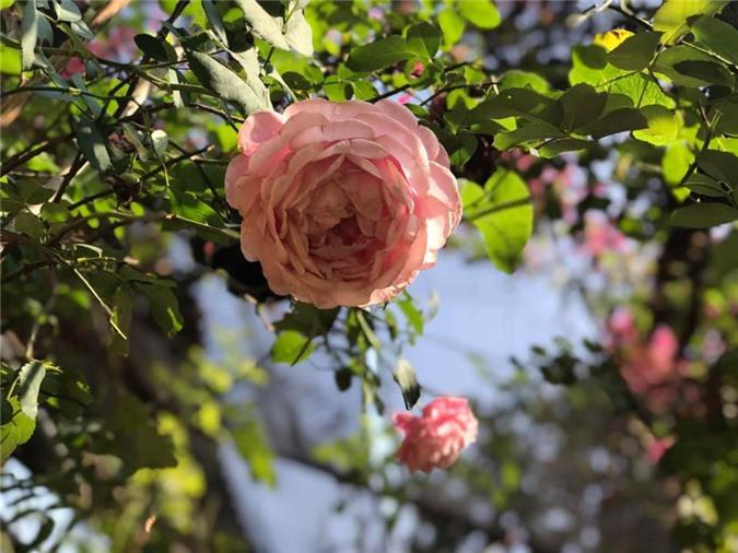 Vườn cây ăn quả, hoa lá ngập tràn rộng 5000m2 của diễn viên Kiều Trinh - Ảnh 10.