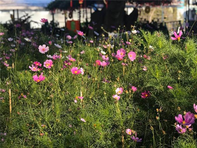 Vườn cây ăn quả, hoa lá ngập tràn rộng 5000m2 của diễn viên Kiều Trinh - Ảnh 2.