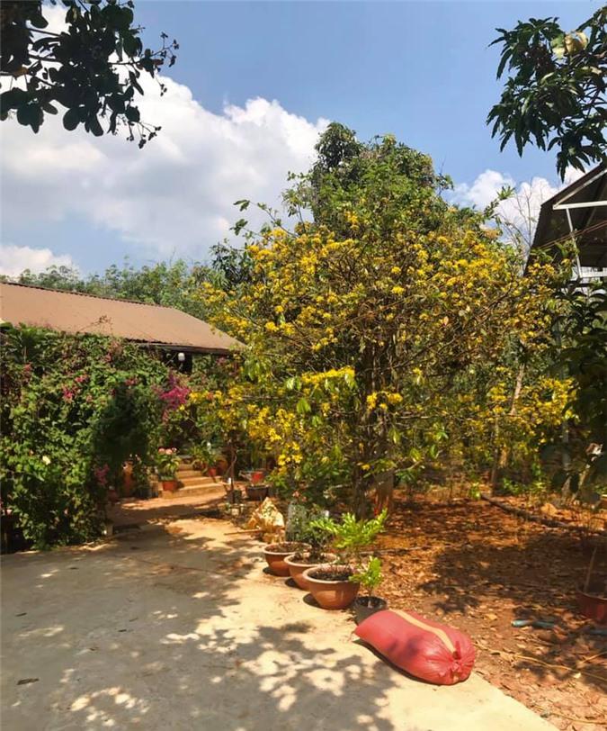 Vườn cây ăn quả, hoa lá ngập tràn rộng 5000m2 của diễn viên Kiều Trinh - Ảnh 4.