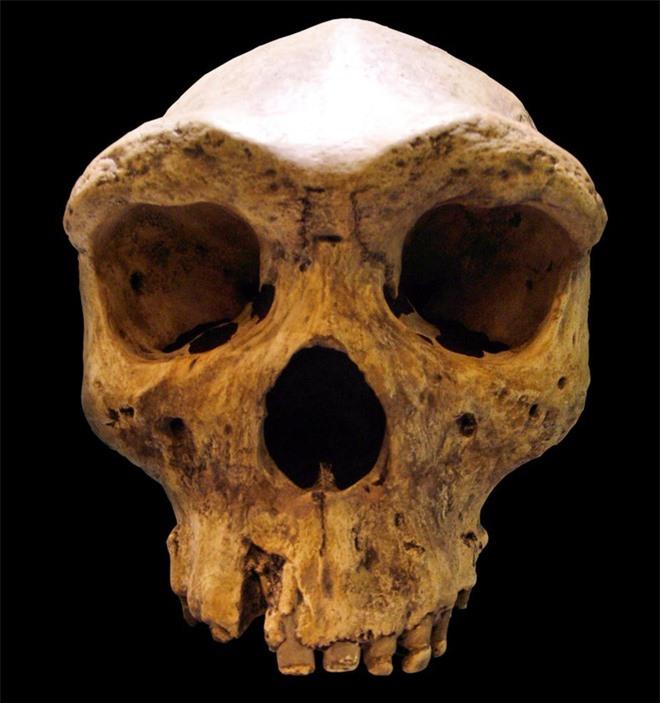 Nghiên cứu mới: Tổ tiên loài người đã lai với một giống người bí ẩn, vẫn còn cả dấu vết gen trong người hiện đại - Ảnh 2.