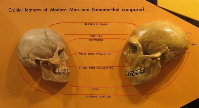 Nghiên cứu mới: Tổ tiên loài người đã lai với một giống người bí ẩn, vẫn còn cả dấu vết gen trong người hiện đại - Ảnh 4.