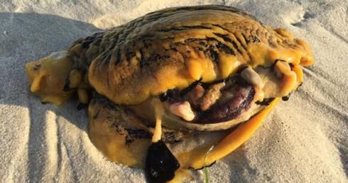 Một sinh vật khác thường trên bãi biển gần thành phố Perth, Australia.