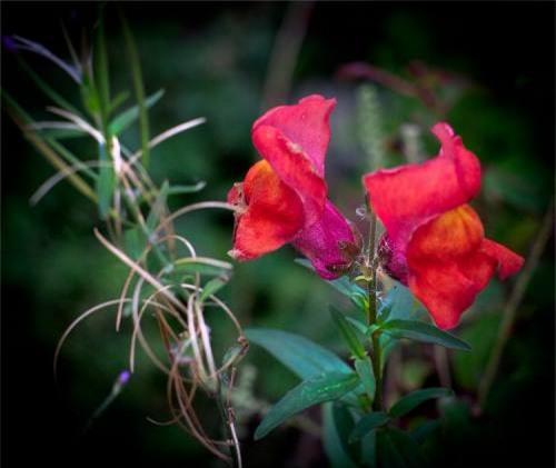 """Rùng mình với loài hoa """"đầu lâu"""" đẹp quyến rũ đến """"kinh dị"""" - 5"""