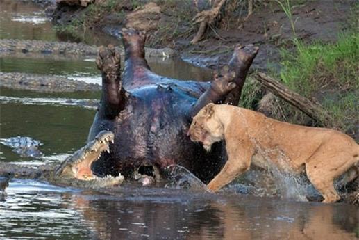 Câu chuyện diễn ra ở Công viên quốc gia Masai Mara, Kenya.