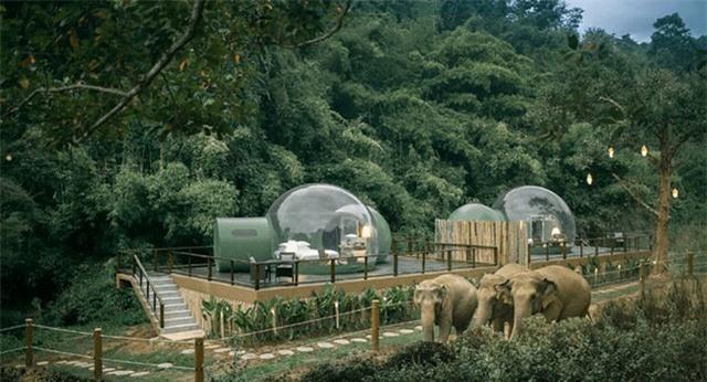 Khám phá cuộc sống những chú voi từ ngôi nhà bong bóng - Ảnh 1.
