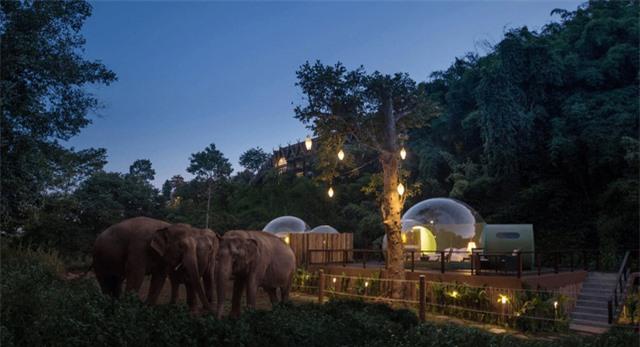 Khám phá cuộc sống những chú voi từ ngôi nhà bong bóng - Ảnh 2.