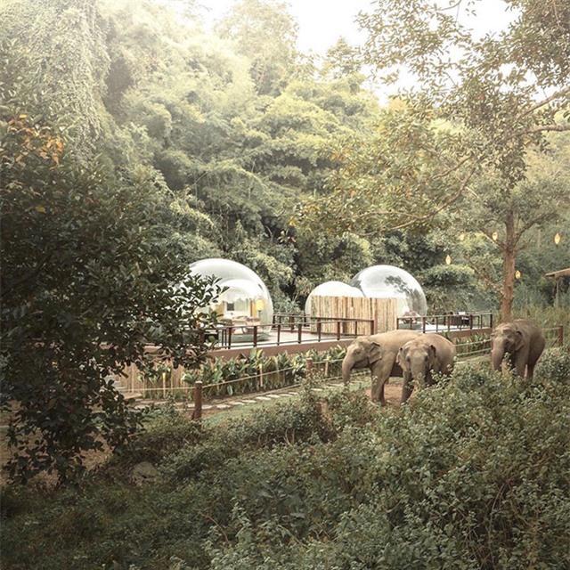 Khám phá cuộc sống những chú voi từ ngôi nhà bong bóng - Ảnh 4.