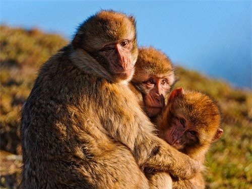 Những loài vật có 'nữ quyền' tuyệt đối trong tự nhiên