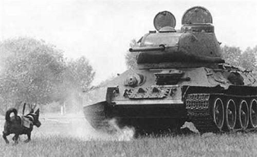 Những vũ khí kỳ lạ của Thế chiến 2 - 6