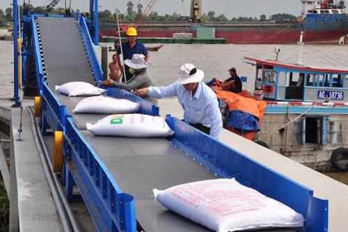 Giá gạo tăng ngoài dự đoán của doanh nghiệp