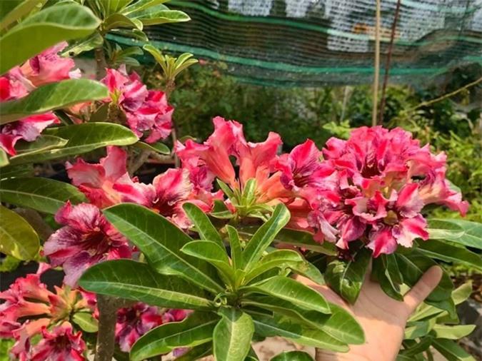 """Thích thú với khu vườn toàn """"hoa quả nhập ngoại"""" của ca sĩ Mỹ Lệ - Ảnh 11."""