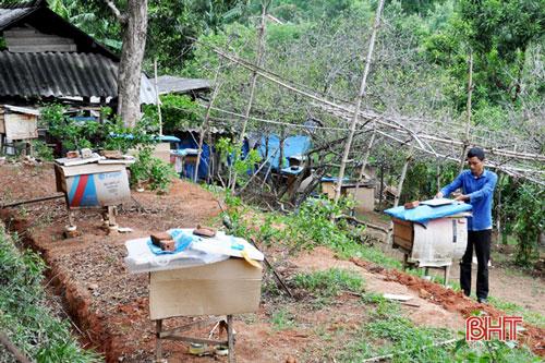 Ngoài các giống cây đặc sản, Dũng mở rộng trang trại với việc nuôi ong, dê, bò...