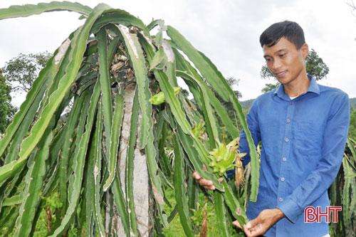 Suy nghĩ chín chắn hơn sau nhiều thử nghiệm không thành, Nguyễn Tiến Dũng quyết tâm xây dựng trạng trại với sản phẩm chủ lực là các giống cây ăn quả đặc sản