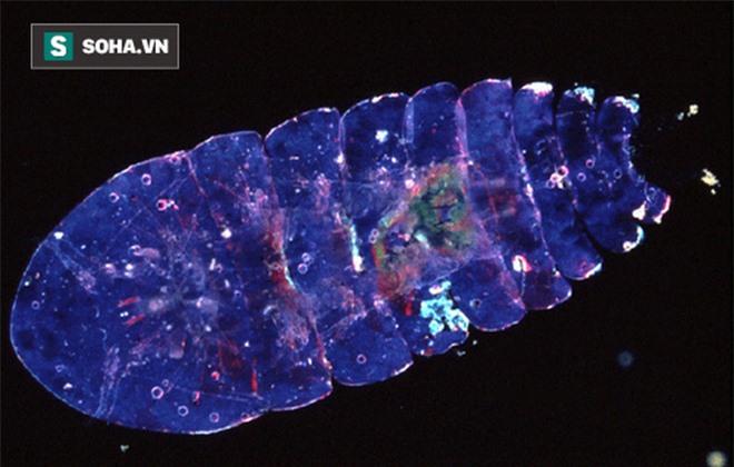 Sapphire biển – loài động vật dị bậc nhất hành tinh, có khả năng tàng hình - Ảnh 2.