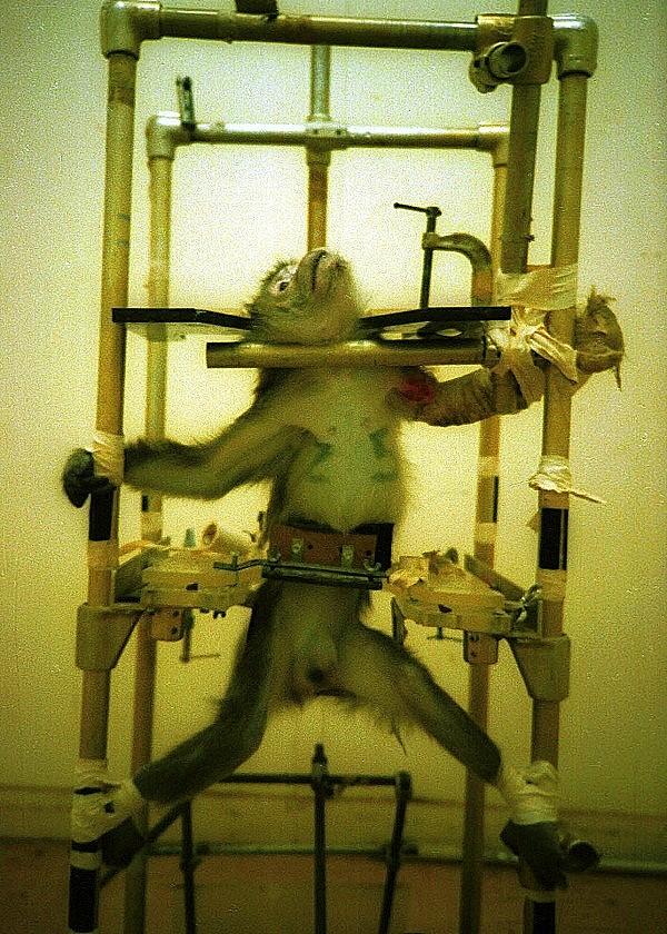 Thí nghiệm khỉ.