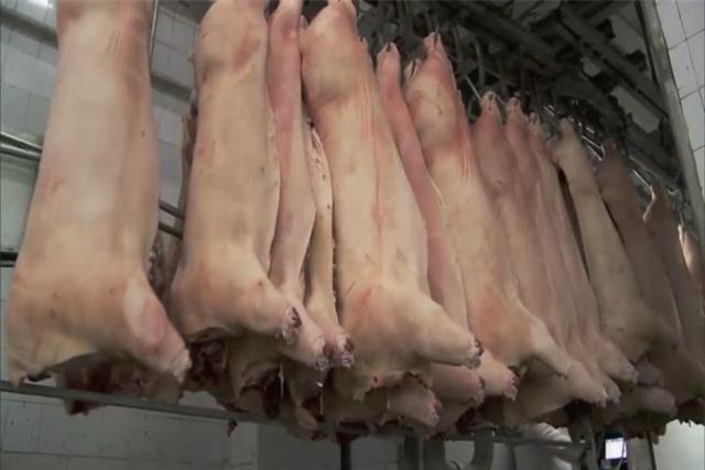 Sau tháng 6, nguồn cung thịt lợn mới có khả năng tăng mạnh - Ảnh 1.