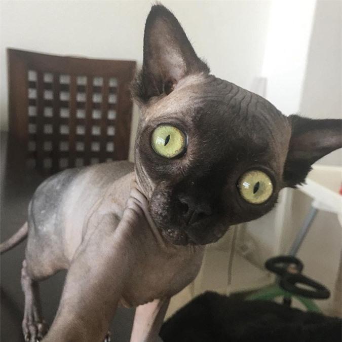 """Tưởng dơi nhưng hóa ra lại là mèo, cô """"boss"""" bỗng nhiên nổi tiếng trên mạng xã hội vì ngoại hình lạ mắt - Ảnh 1."""