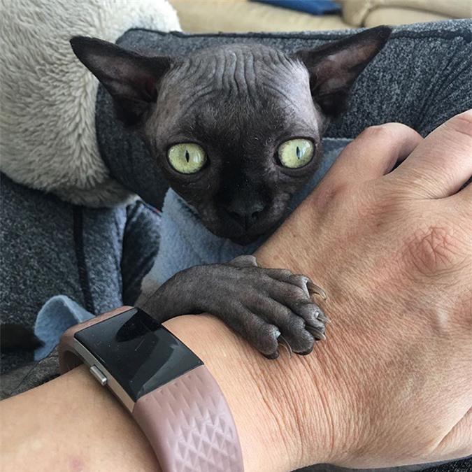 """Tưởng dơi nhưng hóa ra lại là mèo, cô """"boss"""" bỗng nhiên nổi tiếng trên mạng xã hội vì ngoại hình lạ mắt - Ảnh 3."""