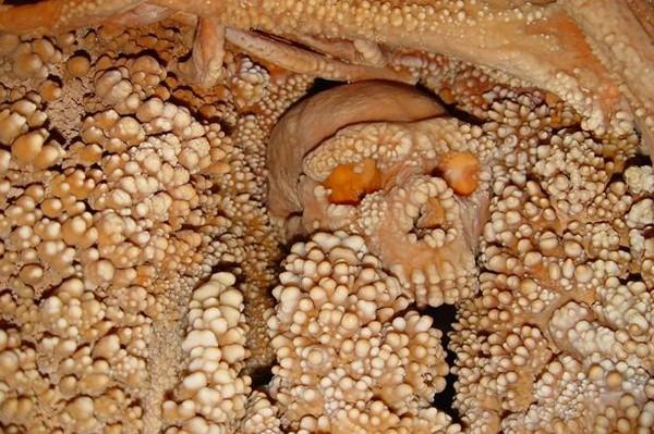 """Bộ xương hóa thạch Người đàn ông Altamura với hàng nghìn """"chiếc răng"""" mọc kín hộp sọ."""