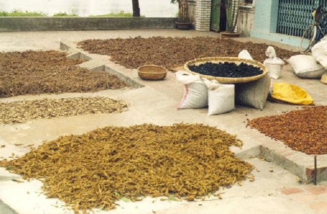 Cây dược liệu đã làm giàu cho hàng trăm hộ dân trong xã Tân Quang, huyện Văn Lâm (Ảnh: Internet)