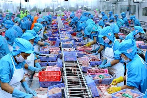 Xuất khẩu cá tra chịu ảnh hưởng nặng nề nhất từ dịch Covid-19 (Ảnh: Internet)