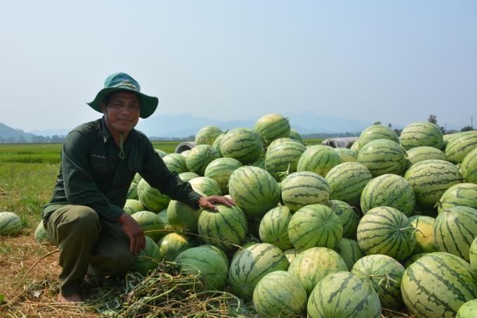 Ông Nguyễn Tấn Nam bên đống dưa chất đống bán không được.