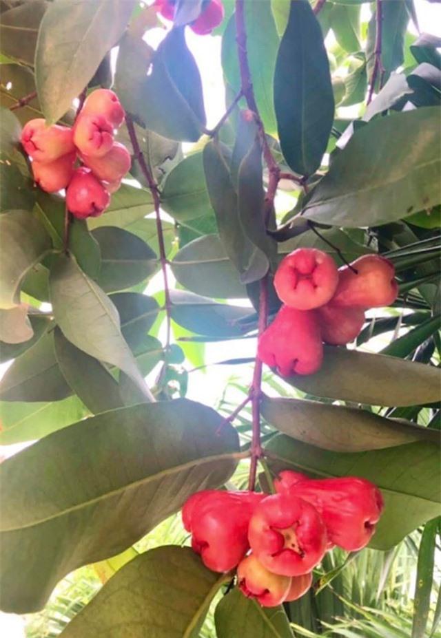 Đã mắt với khu vườn sai trĩu quả, ngập hoa của gia đình MC Quyền Linh - 7