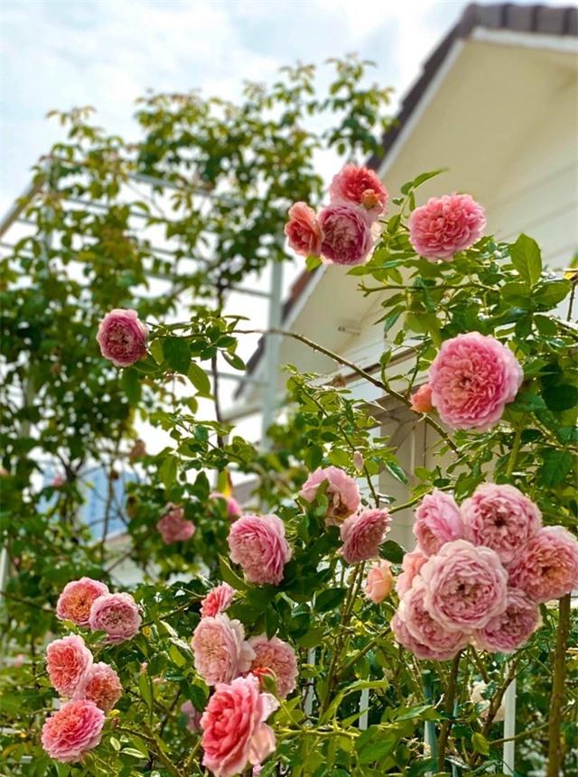 Đã mắt với khu vườn sai trĩu quả, ngập hoa của gia đình MC Quyền Linh - 9