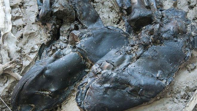 Khai quật những bộ hài cốt không nguyên vẹn, phát hiện bí mật đen tối trong lịch sử - Ảnh 5.